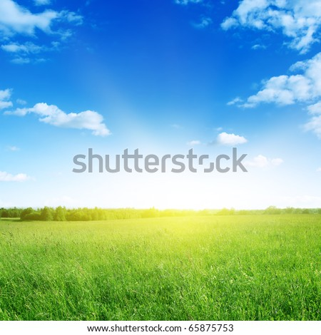 Field of grass and sun in blue sky.