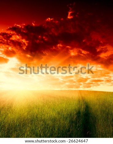 field of grass and sunset #26624647