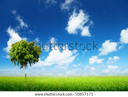 field of grass and tree #50857171