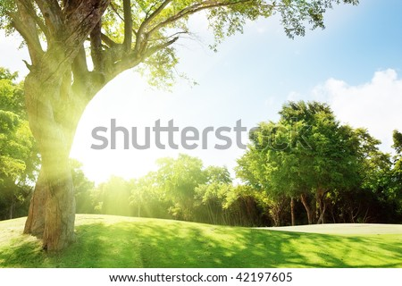 Stock Photo field of grass and trees