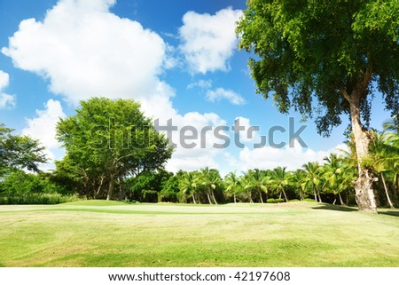 field of grass and trees