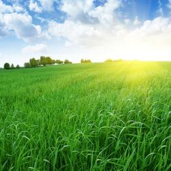 Field of grass,blue sky and sun.