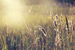 field of grass during sunset