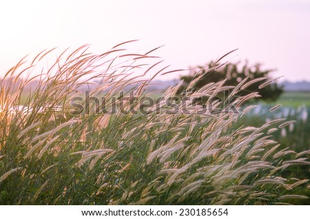 field of grass during sunset for background - stock photo