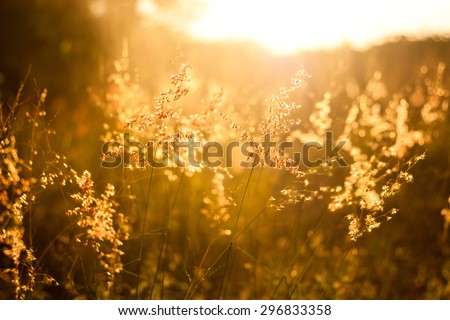 field of grass during sunset ...