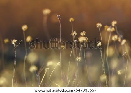 field of grass flower with pastel tone( vintage tone) background., selective focus, shallow dept of field #647335657