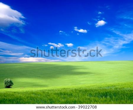 field of grass. meadow green under sky backgrounds #39022708