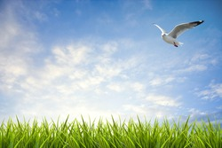 field of grass under sky and flying bird background