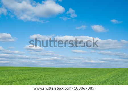 Field of green crop and blue sky with white clouds