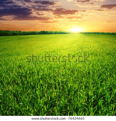 Field of green grass and beautiful sunset.