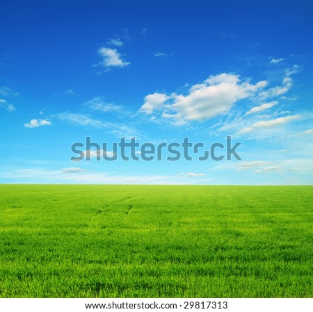 field of green grass and blue cloudy sky #29817313