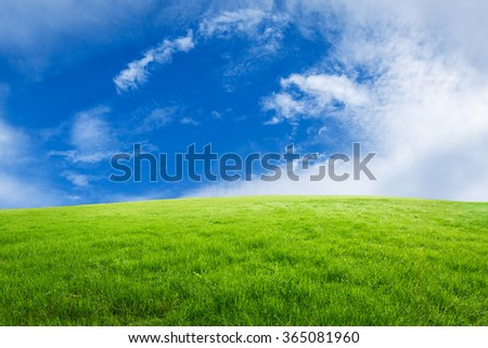 Field of green grass and blue sky #365081960
