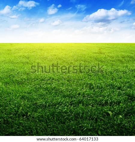 Field of green grass and blue sky.