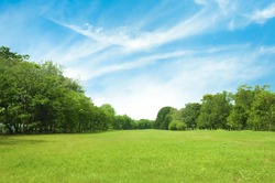 Field of green grass and blue sky in summer day.