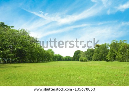 Field of green grass and blue sky in summer day. #135678053