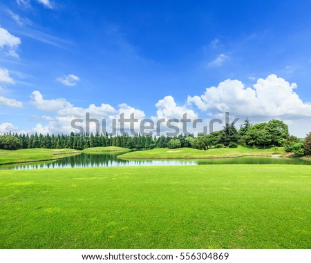 field of green grass and blue sky in summer day #556304869