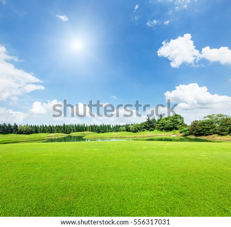 field of green grass and blue sky in summer day #556317031