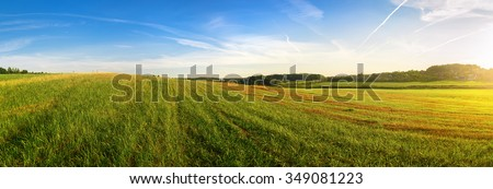 Field of green grass and blue sky. Panoramic shot. Sunny day in the countryside. Summer landscape. #349081223