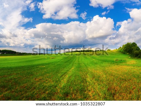 Field of green grass and blue sky with cumulus clouds. Rural landscape. Summer day in the countryside.