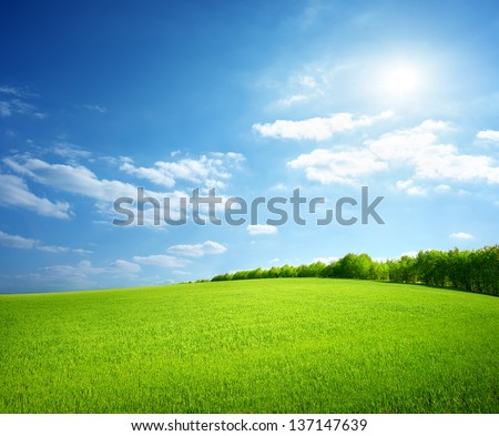 Field of green grass and perfect sky and trees #137147639