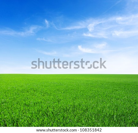 Field of green grass and sky #108351842