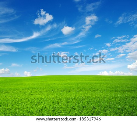 field of green grass and sky - Shutterstock ID 185317946