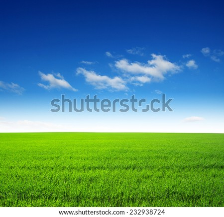 field of green grass and sky #232938724
