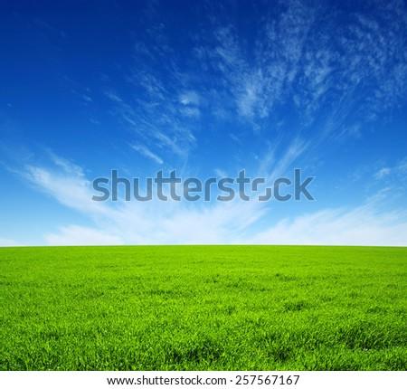 field of green grass and sky - Shutterstock ID 257567167