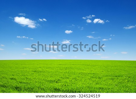 field of green grass and sky #324524519