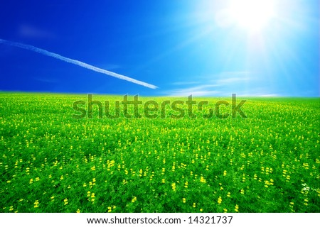 Field of green grass over blue sunny sky - stock photo