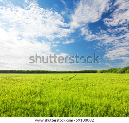 field of green rye and blue cloudy sky - stock photo