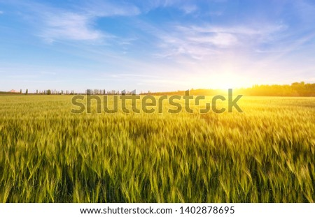 Field of green wet grass and colorful sunset in nature, background #1402878695