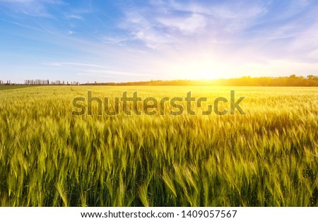 Field of green wet grass and colorful sunset in nature, background #1409057567