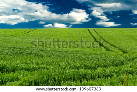 Field of green wheat and a blue sky - stock photo