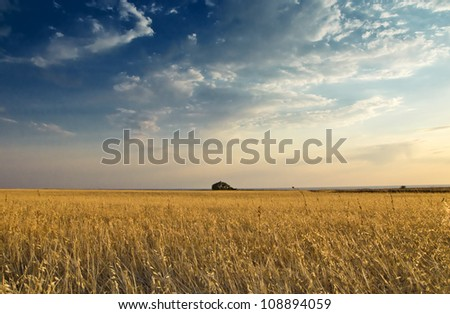 field of oat against sky