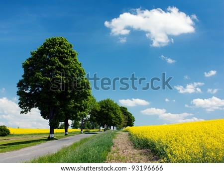 field of rapeseed with road and alley