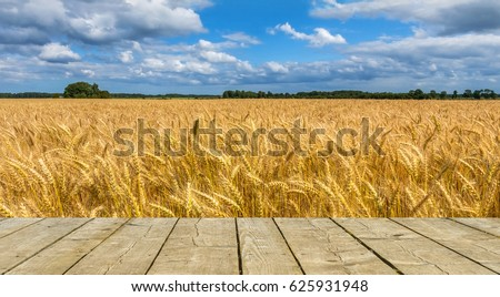 Field of ripening cereal. Board of planks may be used for text. Photo was taken in one of the ecologically cleanest regions of Europe #625931948