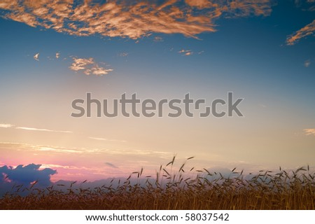 Field of rye under a dramatic sky