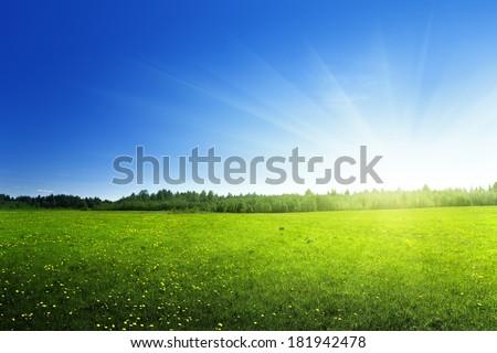 field of spring flowers #181942478