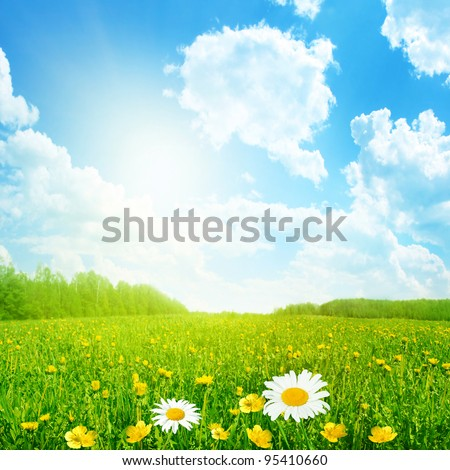 Field of spring flowers and sun on blue sky.