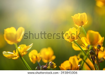 field of spring flowers and sunlight #393841006