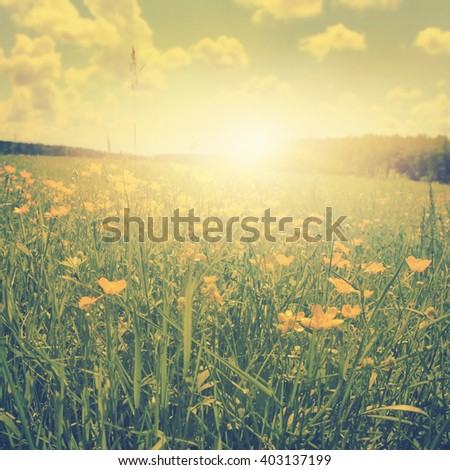 Field of spring flowers at sunset in vintage style.