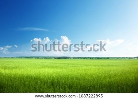 field of spring grass #1087222895