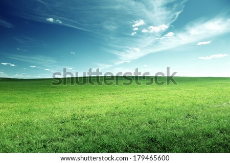 field of spring grass