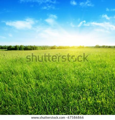 Field of summer grass,blue sky and sun. #67586866