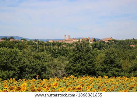 Field of Sunflowers with the town of Citta Della Pieve in the background. Foto d'archivio ©
