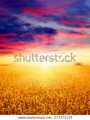 Field of wheat and sun #277371119