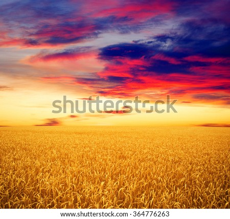 Field of wheat and sun #364776263