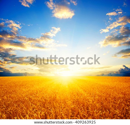 Field of wheat and sun #409263925
