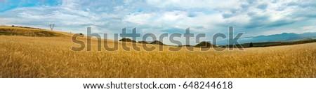 Field of wheat, next to historical tumulus graves panorama view. Bintepeler, Salihli Manisa  #648244618
